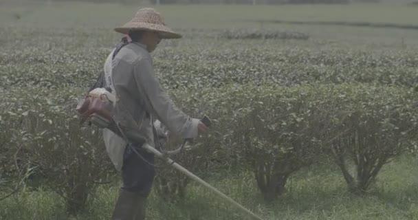 Gardener cutting grass in big park in Chiang Rai area in Thailand