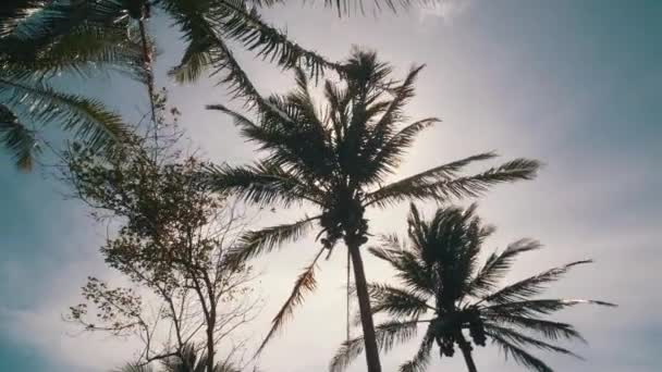 A gyönyörű kókuszpálmákkal a nap sugarai a levelek - video-ban lassú mozgás lágy trópusi szellő lengett Alulnézet