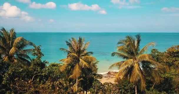 Fly over tropical trees and sandy beach over beautiful lagoon sea water during summer day. Summer and travel vacation concept