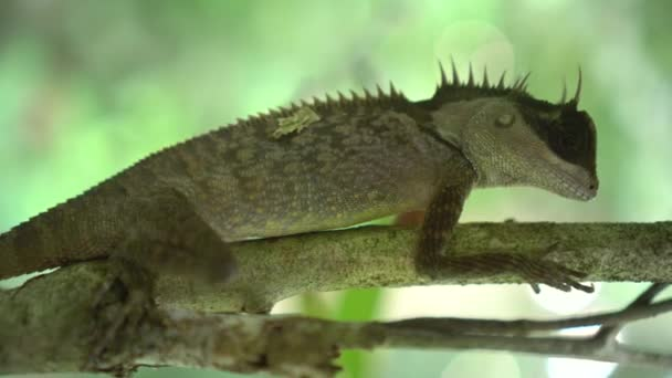 Closeup z orientální zahrady ještěrka na větvi větve přes rozmazané zelené listy