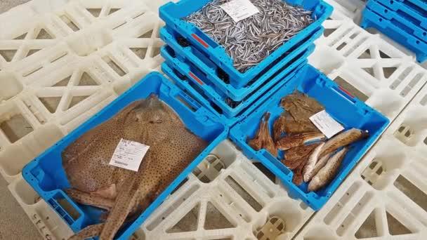 Modré kontejnery s úlovkem křeč ryby z moře