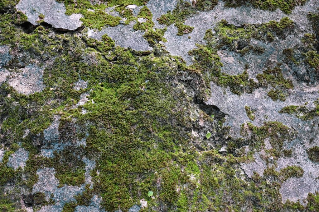 Sparse moss textured background on the rock. Beautiful in nature