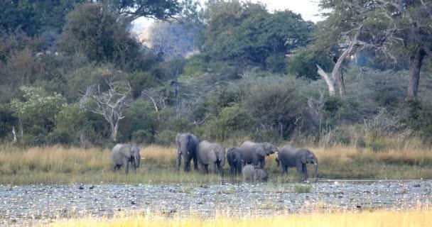 stádo afrických slonů s dětmi, Loxodonta z Napajedla v Bwabwata, Obora Caprivi strip, Namibie, wildlife safari Afrika a divočiny