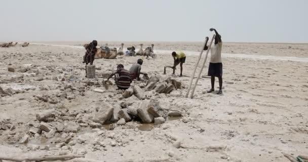 Afar mining salt in Danakil depression, Ethiopia