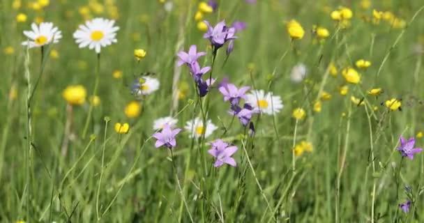 bílé marguerite květiny na louce