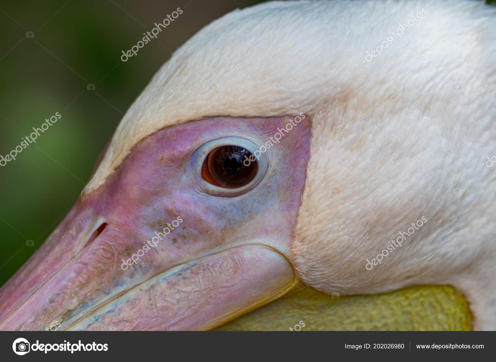 λευκό μεγάλο πουλί μεγάλο πουλί τραβεστί πατήσαμε