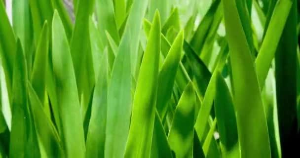 closeup Green leaves  under sunlightat summer