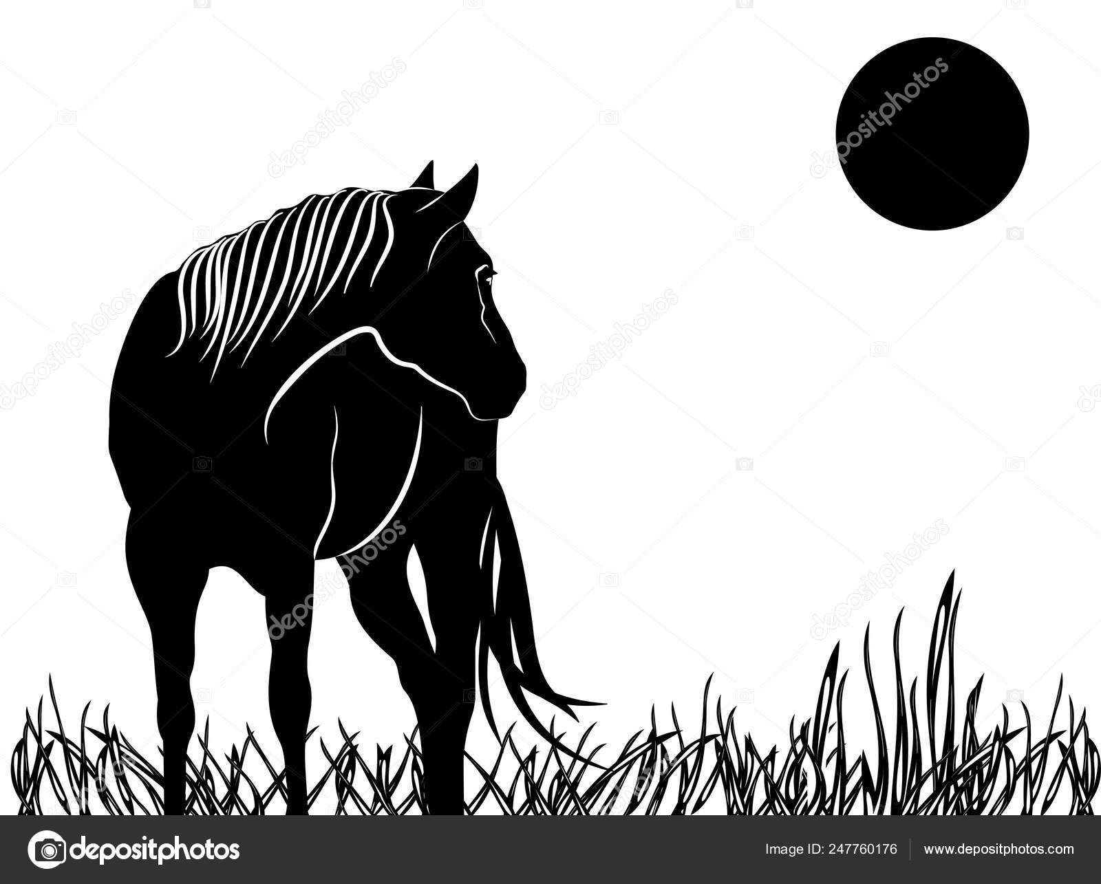Silhouette Beautiful Arabian Horse Black And White Stock Vector C Larisa13 247760176