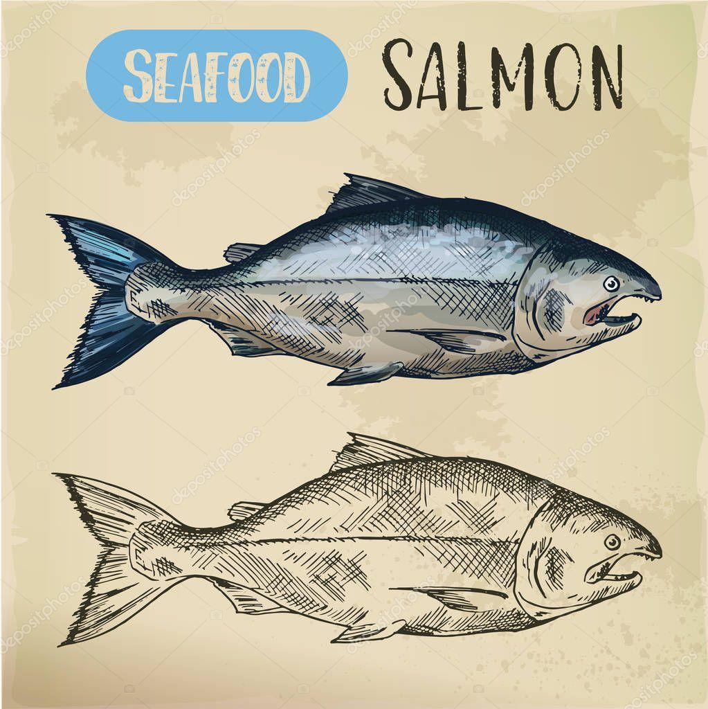 Salmon fish sketch. Hand drawn seafood for menu