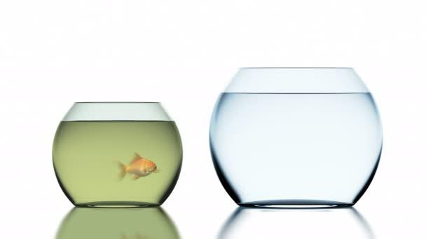 Goldfisch springt in die saubere Fischschale. schöne 3D-Animation, 4k