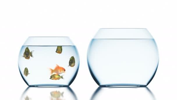 Goldfisch entkommt Piranhas, schöne lustige 3D-Animation auf weißem Hintergrund mit unscharfem Spiegelbild, 4k