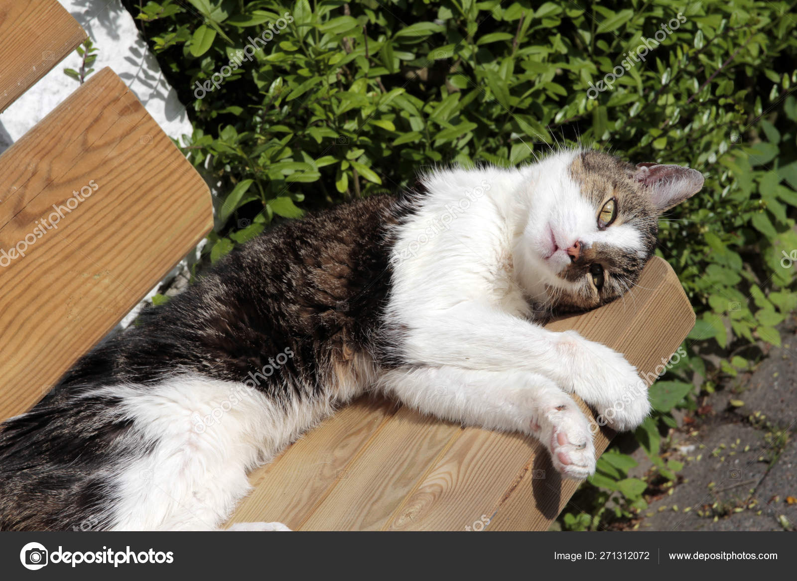 Incredible Sleeping Domestic Cat Garden Bench Stock Photo C Worldnews Inzonedesignstudio Interior Chair Design Inzonedesignstudiocom
