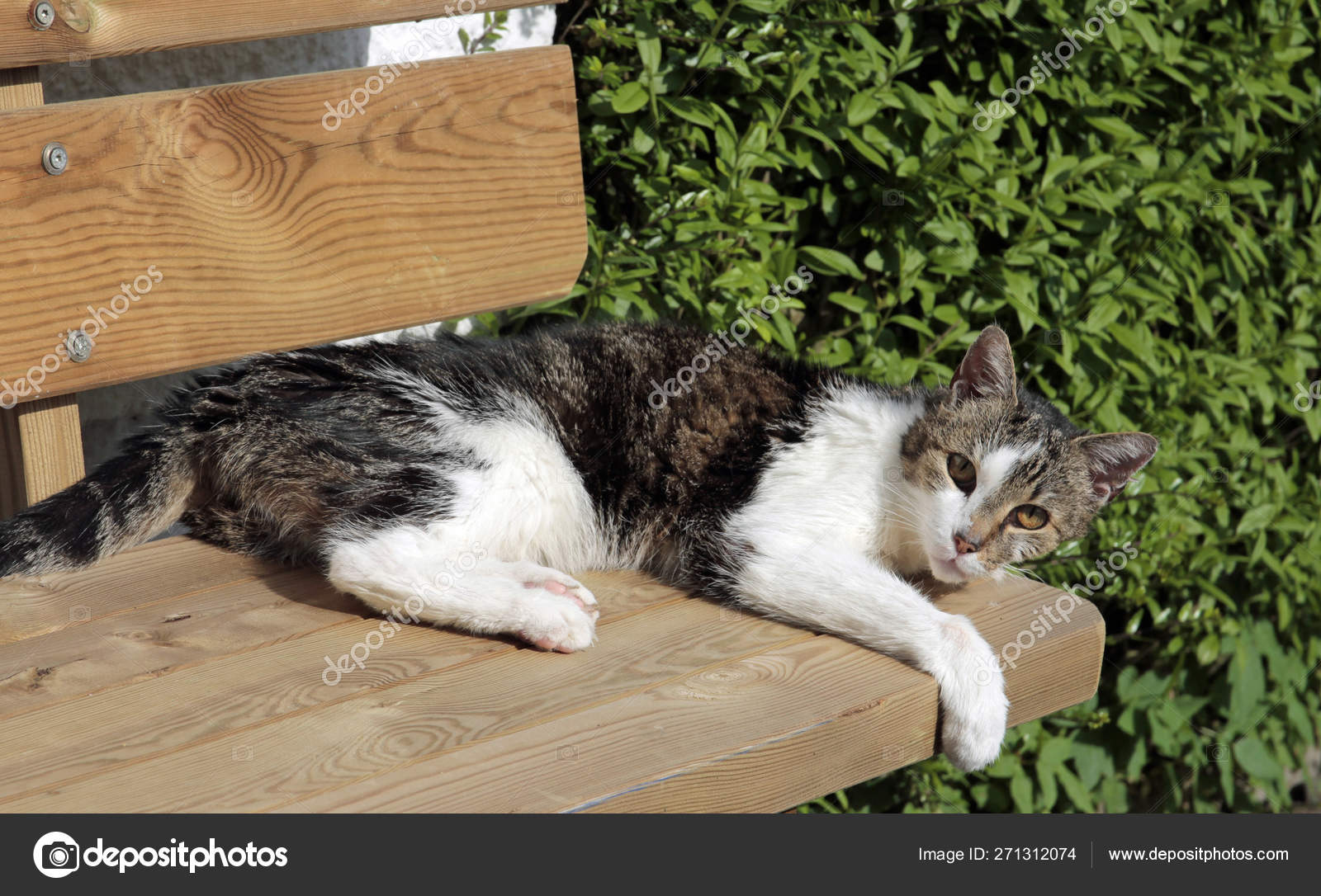 Miraculous Sleeping Domestic Cat Garden Bench Stock Photo C Worldnews Inzonedesignstudio Interior Chair Design Inzonedesignstudiocom