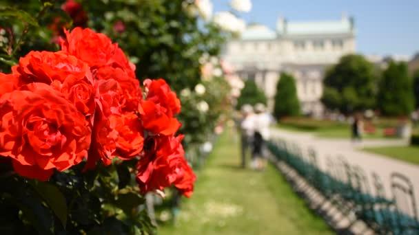 Avusturya 'nın başkenti Viyana' da, Rosengarten 'da bahar günü muhteşem bir gül galerisi.