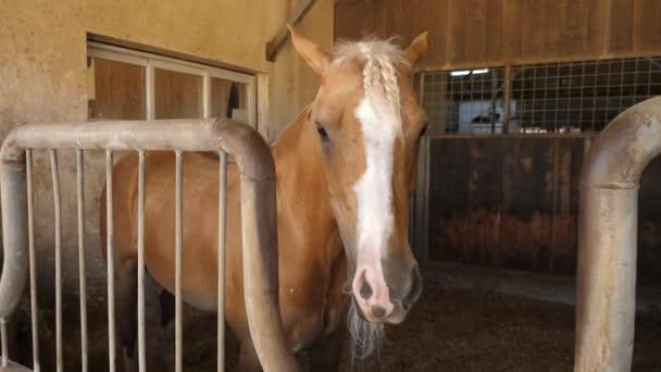 kůň ve stáji