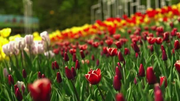 Stunning spring landscape