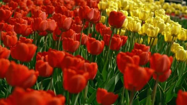Ranní květinová zahrada
