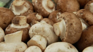 A set of white and brown mushrooms, slow panorama