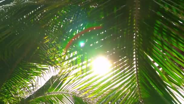 Sun Shining Trought Paln Leaves. Exotic Tropical Nature