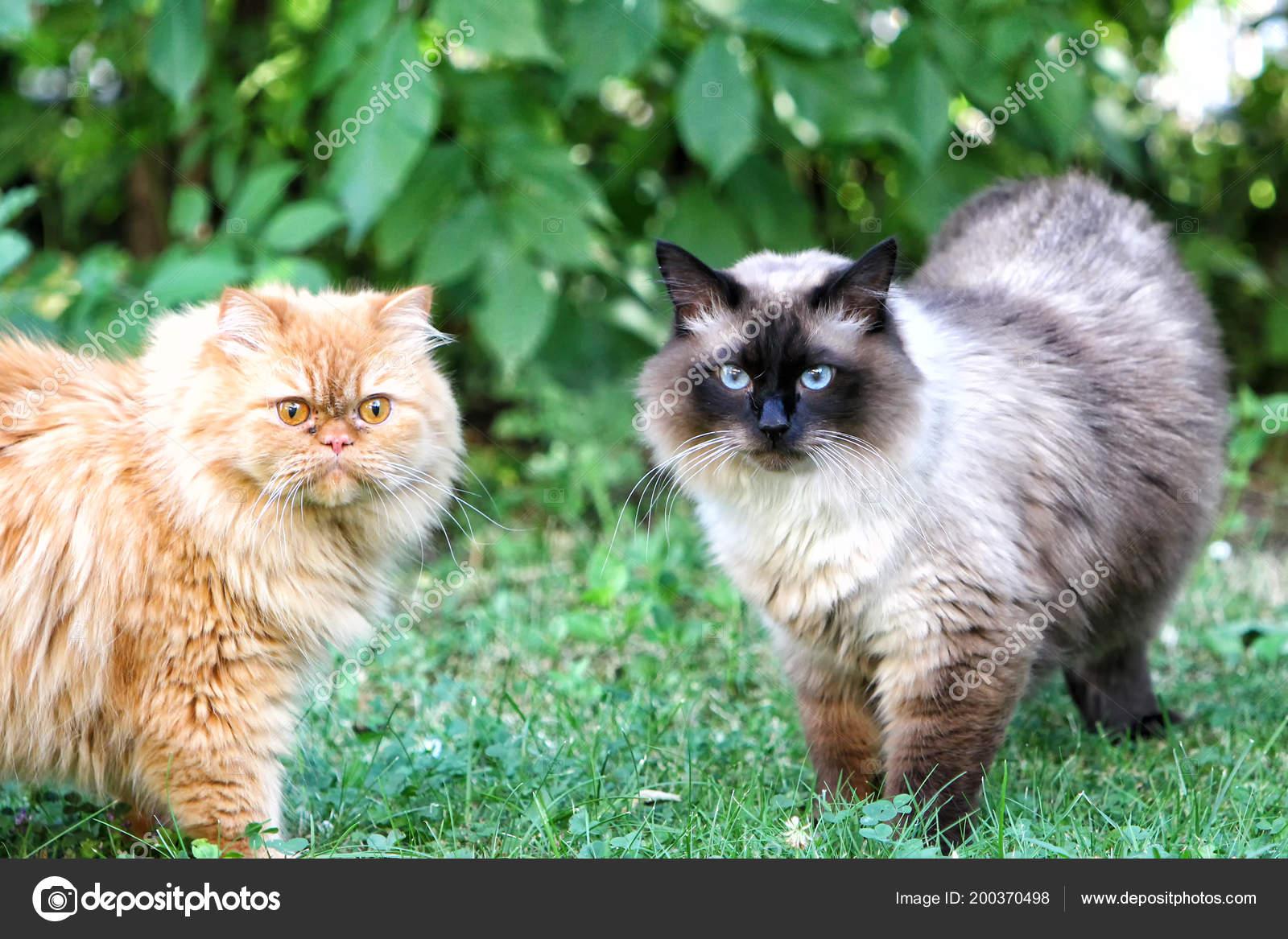 Robustní černá kočička fotky