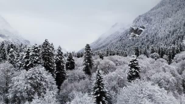 Luftaufnahme eines Waldes an einem bewölkten Wintertag. wunderschöne Winternatur aus Fichten und Kiefern im Schnee. Tiefflug über schneebedeckte Bäume in der Nähe ihrer Wipfel