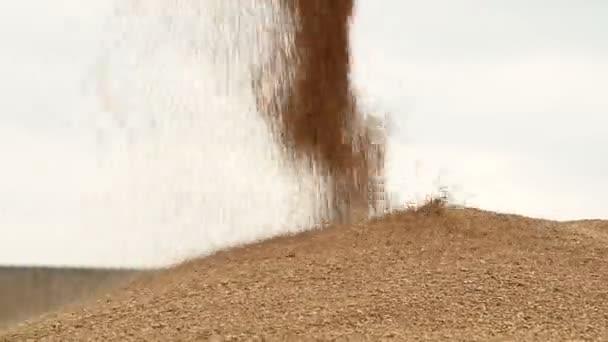 extracción de granos