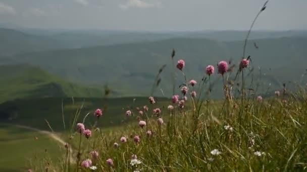 Na svazích hor, na pozadí kopců a vrchů, se blíží na úbočí purpurové květiny. Výlet do hor. Lehký vítr otřásá trávou a divokými květy