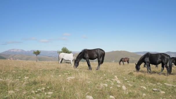 Na vysokohorské pastvině se pasou koně. Stádo dospělých koní a hříbat za slunečného dne