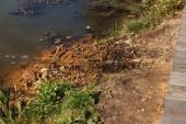 Sumpfalgen. grüne Algenmodelle auf dem Wasser. Moor mit organischer Verschmutzung durch Abwasser. Das vom See verschmutzte Wasser war mit Algen bedeckt. Grüner fieser Sumpf. Oberfläche des Sees mit Grünalgen. Algen