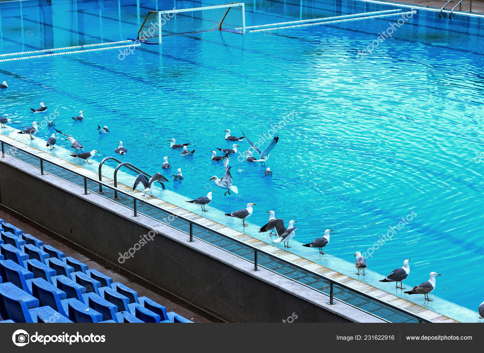 Sports Swimming Pool Swimming Playing Water Polo Jumping ...