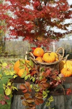 Autumn pumpkins and gourds barrel