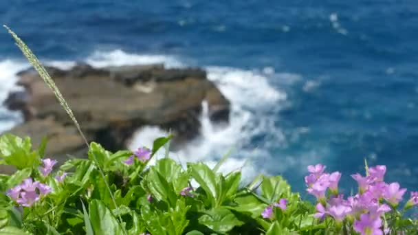 beautiful beach with deep blue water and light blue sky and nice flower