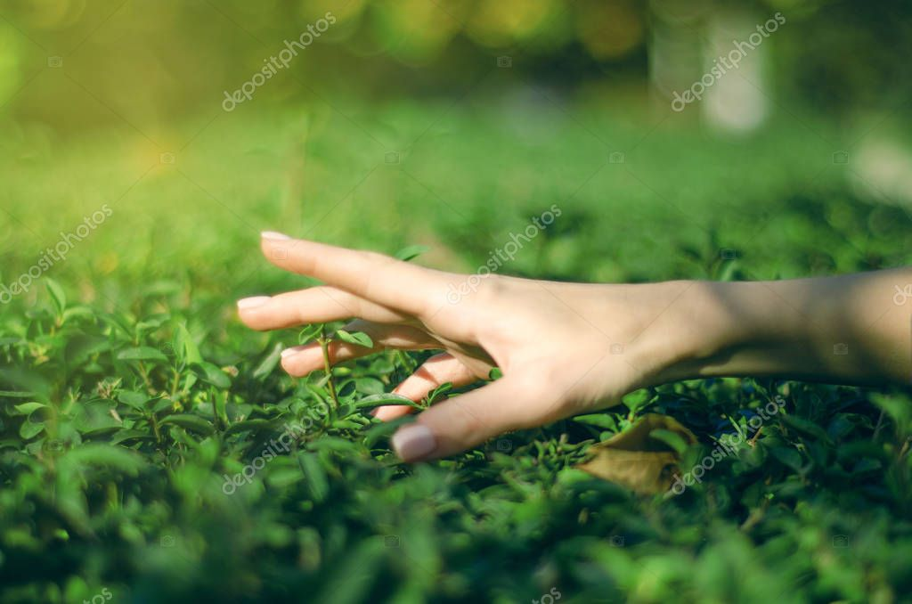 Woman gardener hand bushes