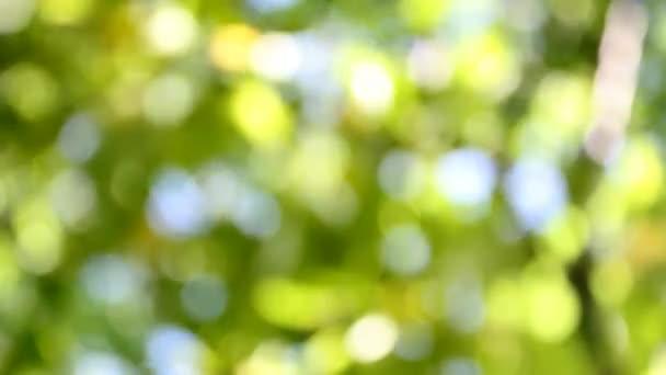 abstraktní rozmazané přirozené záběry pro pozadí