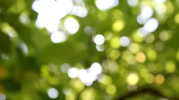 elvont elmosódott természetes felvétel a háttér
