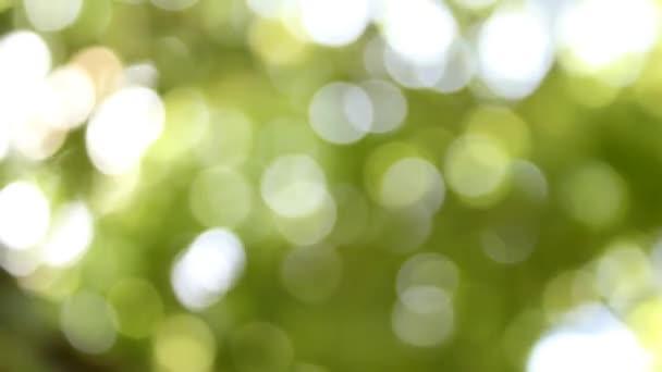 abstraktní rozmazané zelený přírodní záběry pro pozadí