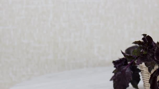 Zavřít pohled na čerstvou bazalku v proutěném koši