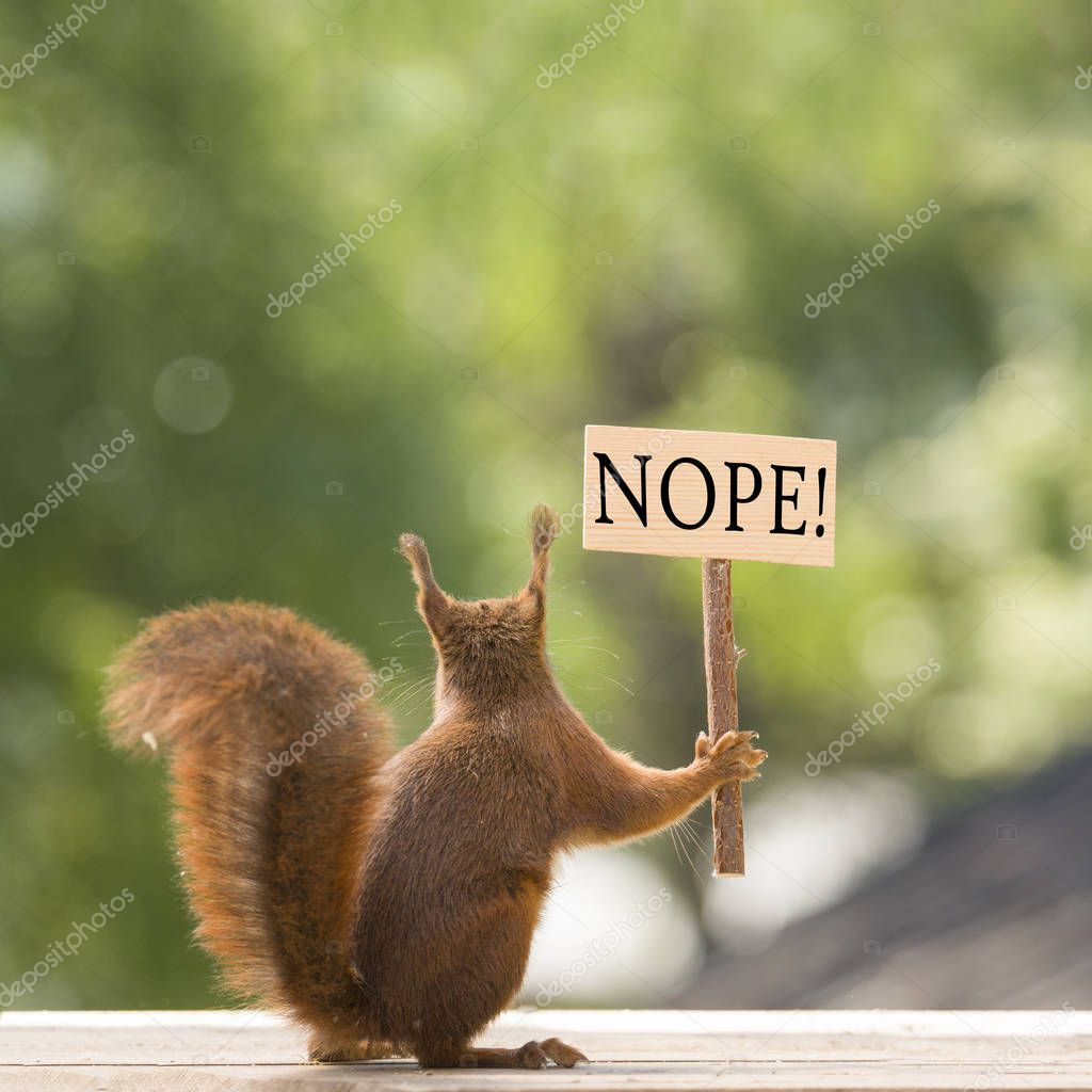 red squirrel is holding an sign in hands