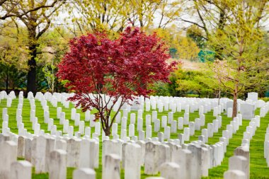 Rows of tombs and graves on military cemetery at spring in Arlington stock vector