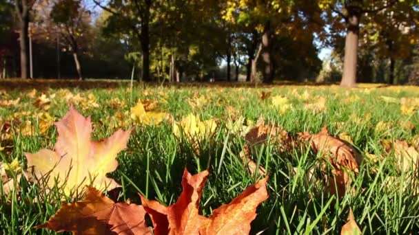 Dried colorful autumn leaves on green grass in a park
