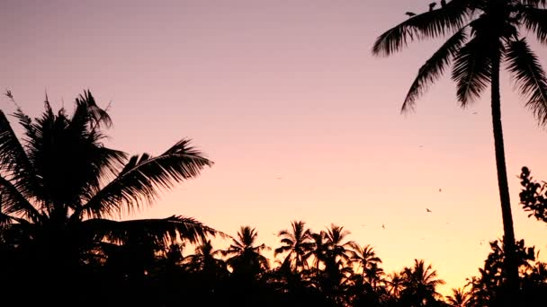 many birds fly under palms silhouette at sunset tropical forest