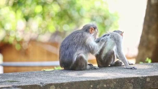 közelkép két majom ül a kövön nézd meg a fa árnyékában ellen fény zöld háttér indiai trópusi parkban