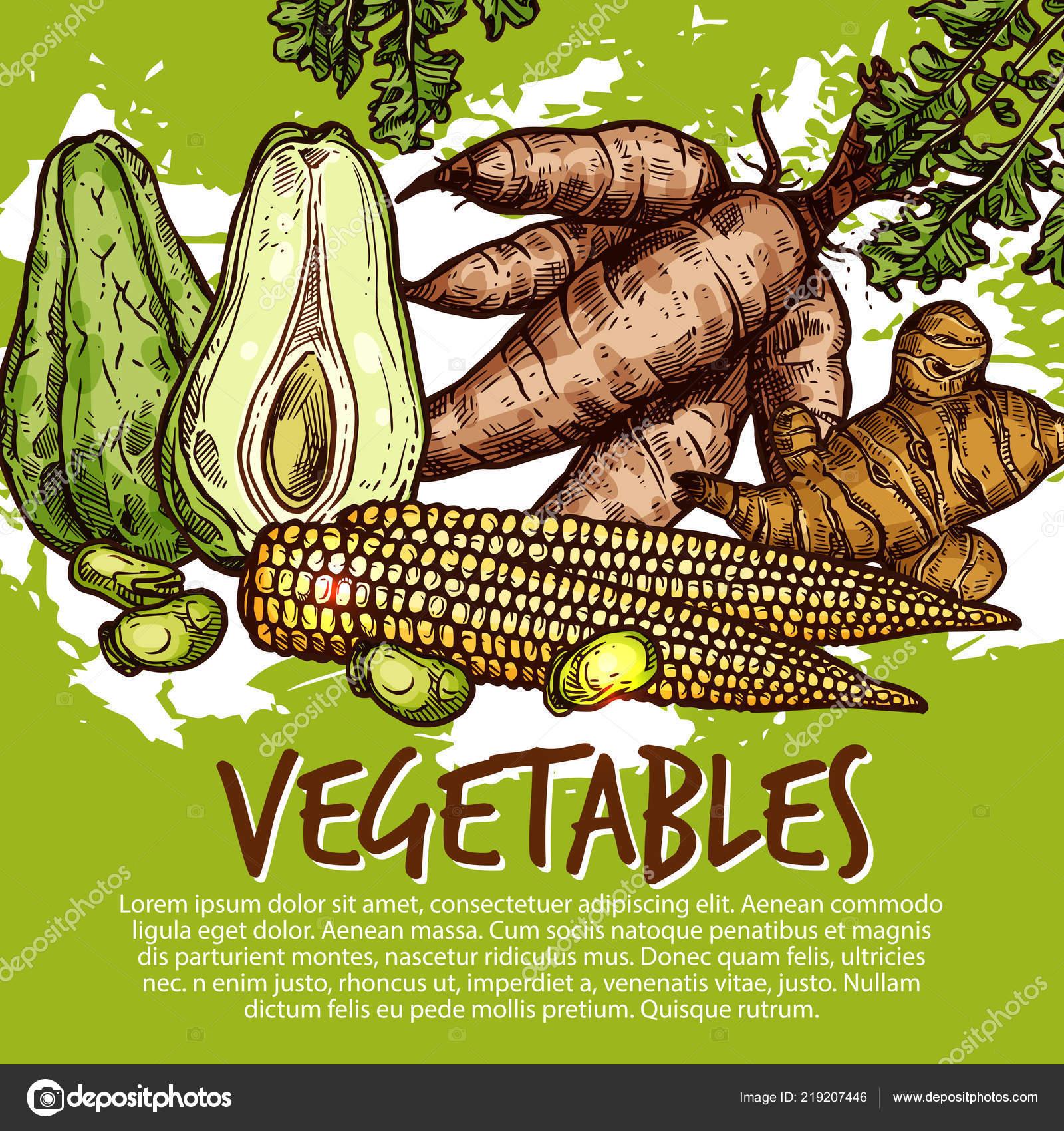 raices de verduras y hortalizas