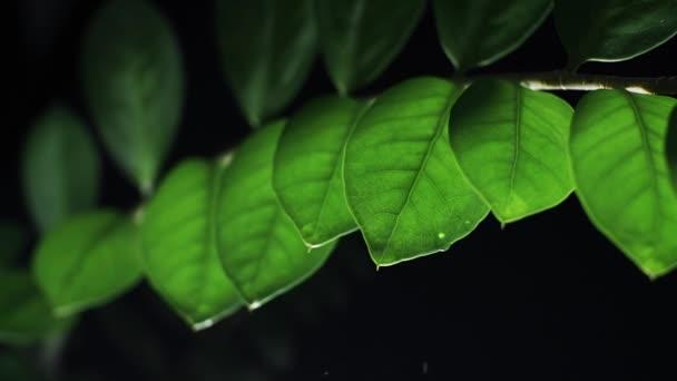 Dešťové kapky na Rostlinovém listí v noci