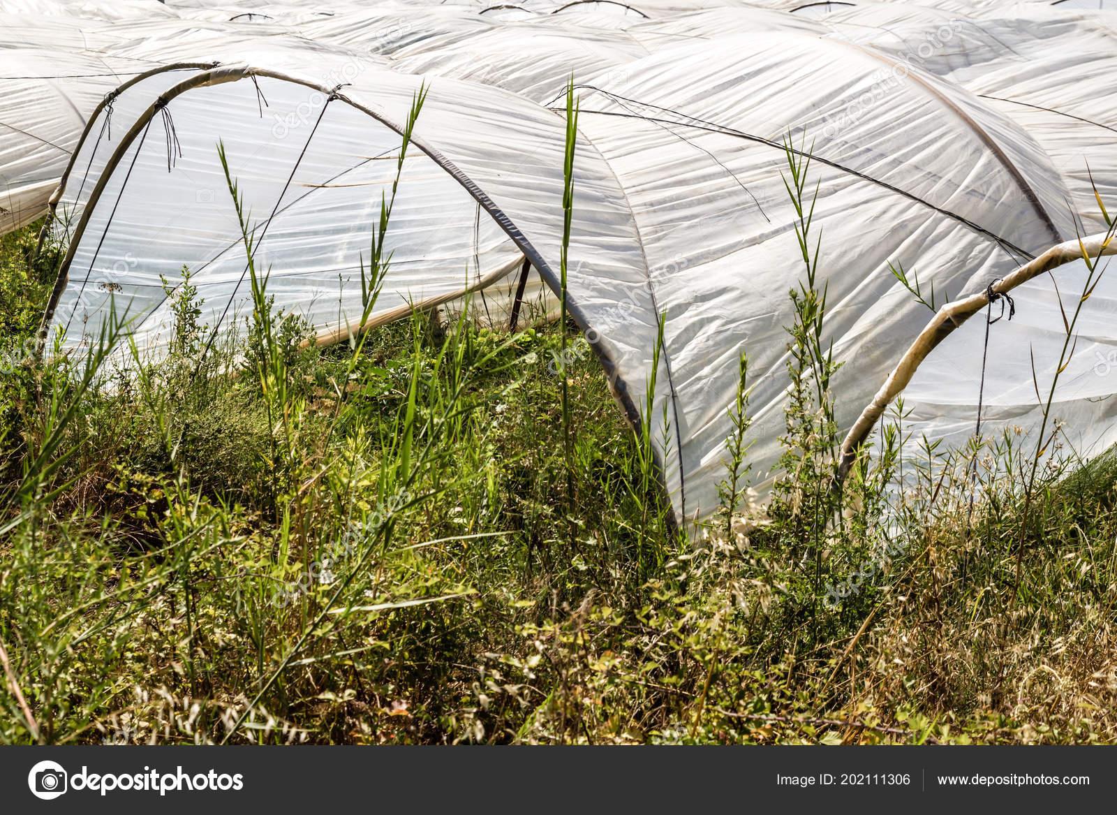 Gewachshaus Aus Polyathylen Kunststoff Tunnel Auf Einen