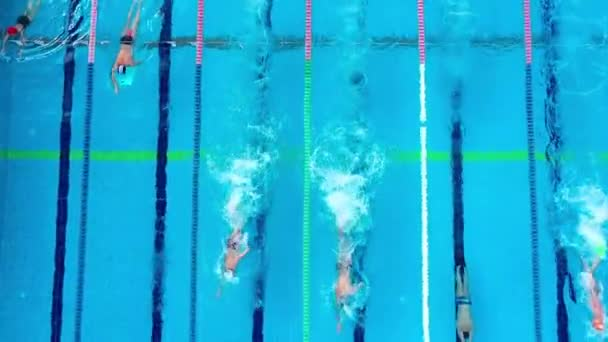 Unidentifiable swimmers train in the pool. Overhead view