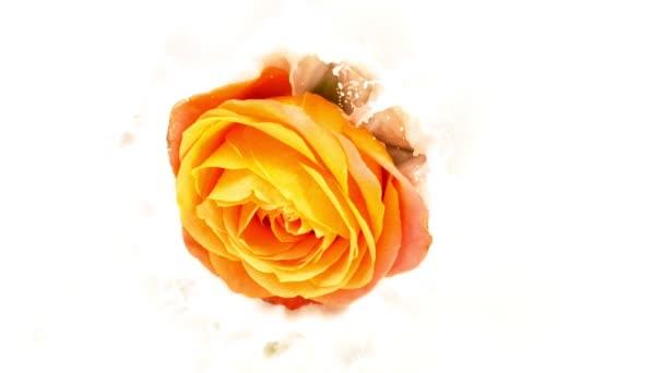 Schöne bunte Rosenblüte, die in Sahneflüssigkeit fällt. Superzeitlupe
