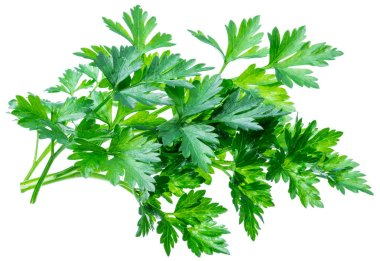 Bunch of parsley herb isolated on white background.
