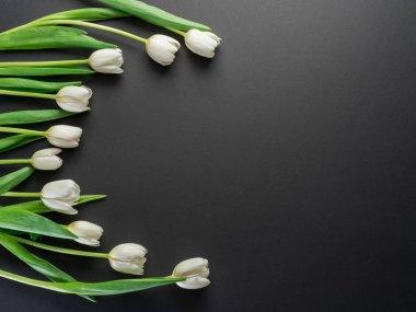 White tender tulips on dark gray background. Top view.