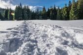 Krásná zimní krajina. Cesta na sněhu bude zelených jedlí na úpatí zasněžených hor.